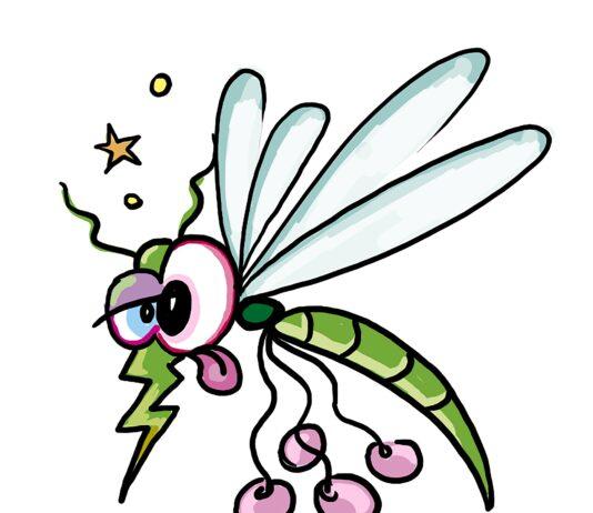 5 remèdes contre les piqûres de moustiques